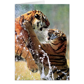 FIGHTING TIGERS CARD