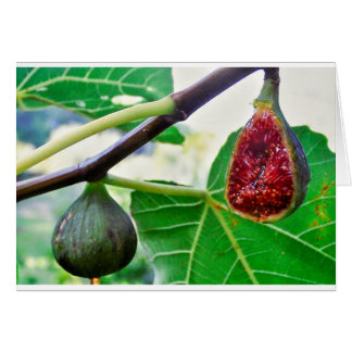 figs on the tree card