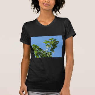 Figs on tree branches tee shirts