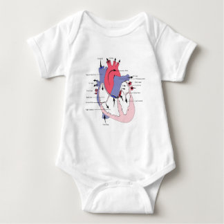 Figure 2. Normal Heart Function.jpg Infant Creeper