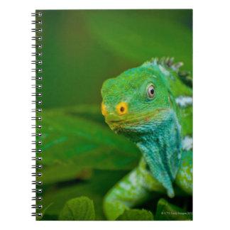 Fiji crested Iguana, Kula Eco Park, Viti Levu, Spiral Notebook