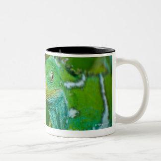 Fiji crested Iguana, Kula Eco Park, Viti Levu, Two-Tone Coffee Mug
