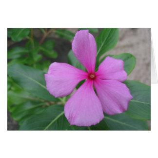 Fiji Floral Card