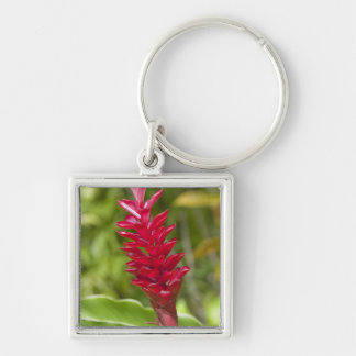 Fiji, Viti Levu Island. Flower. Silver-Colored Square Key Ring