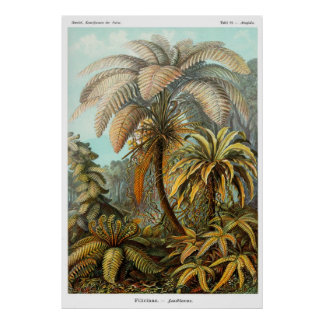 Filicinae (Tree fern) Poster