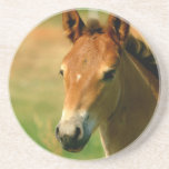Filly Coasters