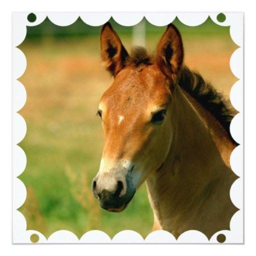 """Filly Horse Invitation 5.25"""" Square Invitation Card"""