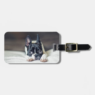 Fina the Boston Terrier Luggage Tag