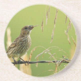 Finch eating seeds of a wild grass beverage coaster