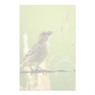 Finch eating seeds of a wild grass stationery