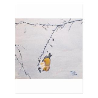 Finch in Winter Post Card