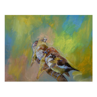 Finches Postcards