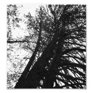 find me in the trees photo print