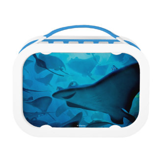 Finding Dory | Hide and Seek - Rays Lunchboxes