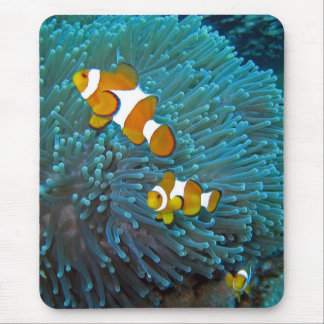 Finding nemo? mouse mat