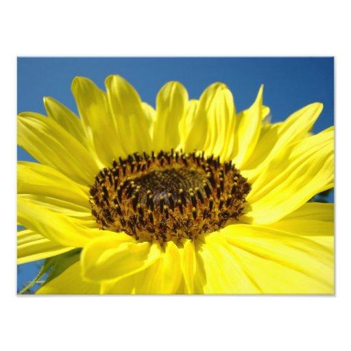 Fine art Photography gifts Yellow Sunflowers Photo Print