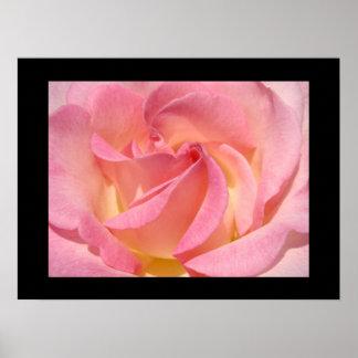 Fine Art Prints gifts Pink Rose Flowers Print