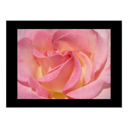 Fine Art Prints gifts Pink Rose Flowers Print