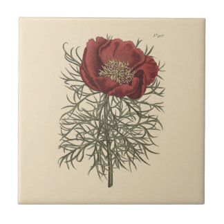 Fine Leaved Peony Botanical Illustration Tile