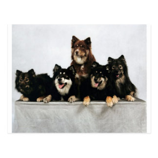 finnish lapphund group.png postcard