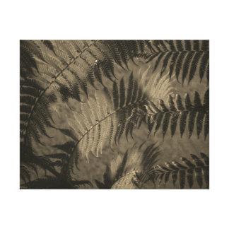 Fir Leaves in Sepia Canvas Print