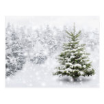 Fir Tree In Thick Snow Postcard