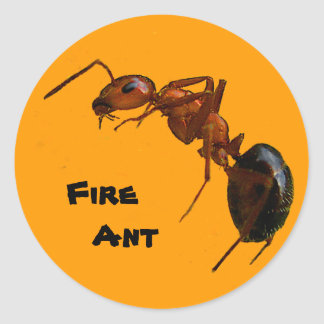 Fire Ant Classic Round Sticker