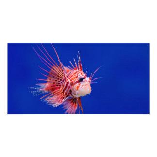 Fire Fish Photo Card