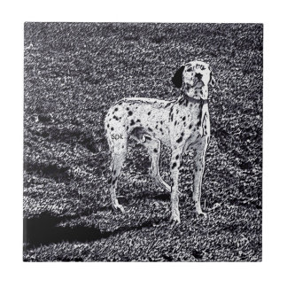 Fire House Dalmatian Dog in Black and White Ink Small Square Tile
