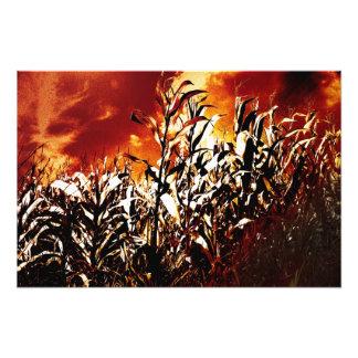 Fire in the corn field photo