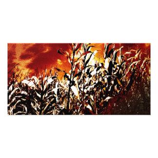 Fire in the corn field customized photo card