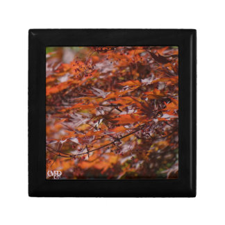 Fire Red Maple Branches Small Square Gift Box