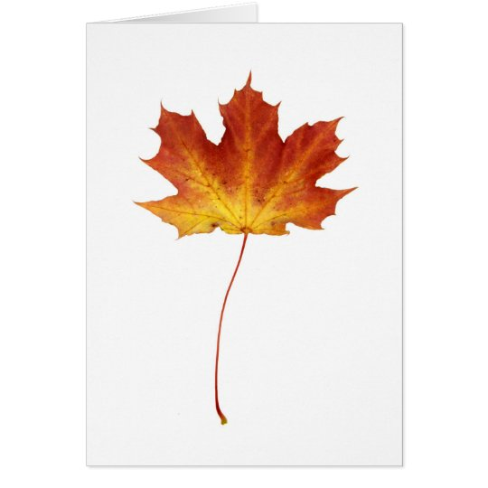 Fire Red Maple Leaf Card