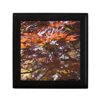 Fire Red Maple Tree Small Square Gift Box