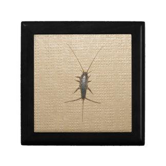 firebrat insect gift box
