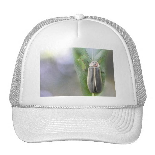 Firefly - Photuris Pyralis Hat
