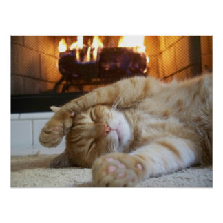 Fireplace Cat Poster