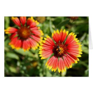 Firewheel - Sundance Wildflower Greeting Card