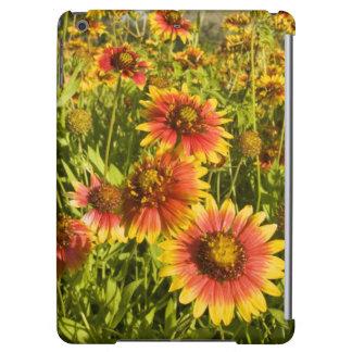 Firewheels Gaillardia pulchella) wildflowers