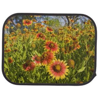 Firewheels Gaillardia pulchella) wildflowers Car Mat