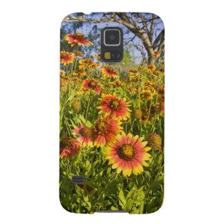 Firewheels Gaillardia pulchella) wildflowers Galaxy S5 Cover
