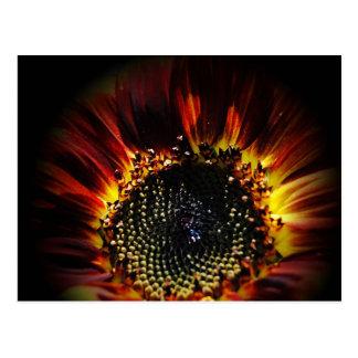 Firey Sunflower Postcard
