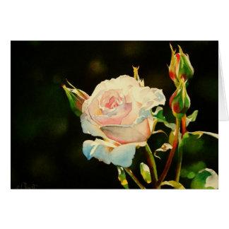 First Light Rose Greeting Card