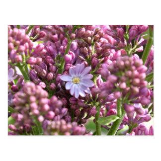 First Lilac Flower with twelve petals by BestPeopl Postcard