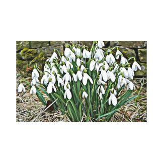 First spring flowers, white snowdrop canvas print