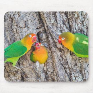 Fischer's Lovebird Mates Mouse Pad