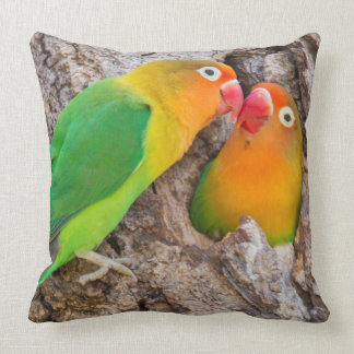 Fischer's Lovebirds kissing, Africa Cushion