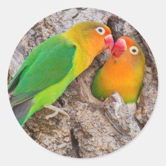 Fischer's Lovebirds kissing, Africa Round Sticker