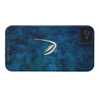 Fish 2 iPhone 4 case