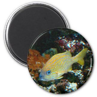 fish 2 Magnet